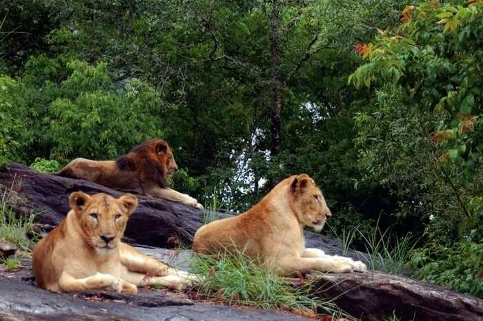 Kanha Tiger park